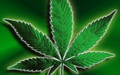 В Чехии легализовали марихуану и другие препараты