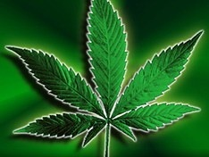 В Чехии легализовали марихуану...лишь частично.