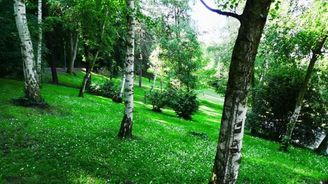 Холм Петршин Летом