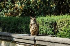 Хищные птицы в саду Пражского Града