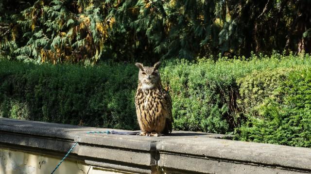 Хищники в Пражском Граде