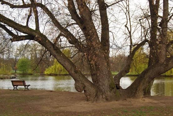 Парк Стромовка
