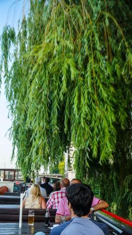 Деревья с берега Влтавы свисают очень низко