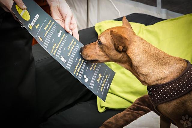 Ресторан для собак в Чехии