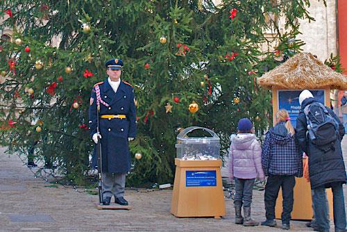 Новогодняя ель в Праге